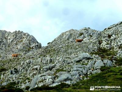 Hayedos Parque Natural de Redes;parques naturales madrid viajes en septiembre rutas la pedriza